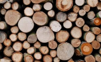 hardwood softwood tree logs